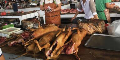 Coronavirus: Shenzhen untersagt das Essen von Hunden und Katzen