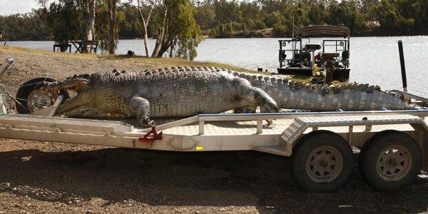 5 Meter langes Monster-Krokodil erschossen