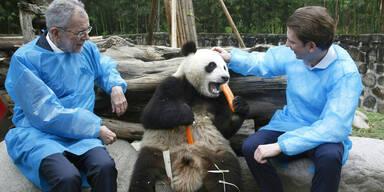 Van der Bellen Kurz Pandas