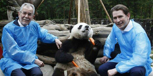 Kurz als Panda-Diplomat & Krisen-Manager