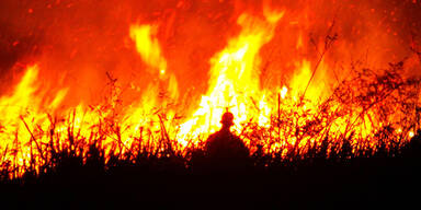 Amazonas Waldbrand Brände feuer