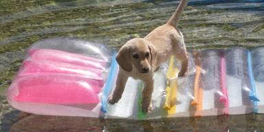 Hundewahl - Diego, 13 Wochen