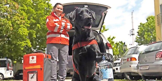 Rettungshund meisterte Bottle-Cap-Challenge