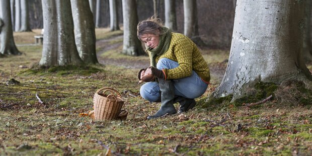 Schlechte Nachrichten für Pilzsammler