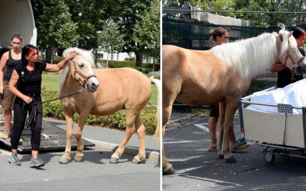 Pferd zu sterbender Frau zu Krankenhaus geholt