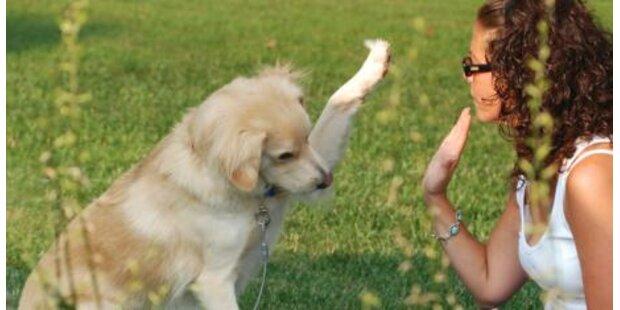 Beschäftigung mit Hunden entspannt