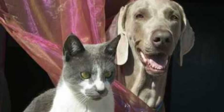 Silvester mit Haustieren