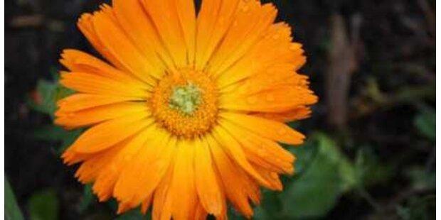 Pflanzen und Kräuter können Wunder wirken