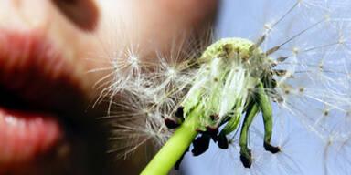 Online-Tagebuch hilft Allergikern