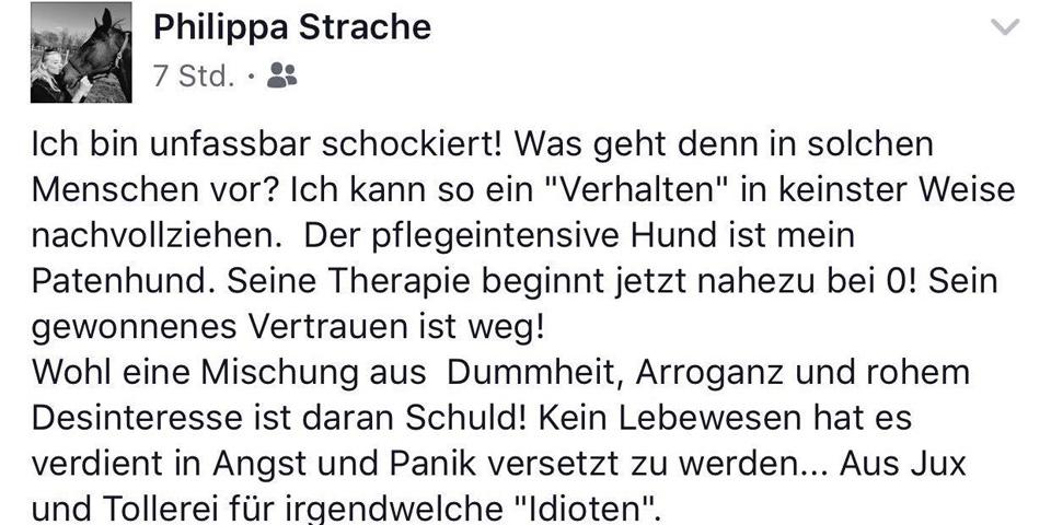Philippa Strache Tierschutzverein Hund Böller