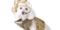 Kopie von Fasching für Tiere - LuxuryDogs Hamburg