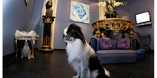 Erste Luxusherberge für Hunde