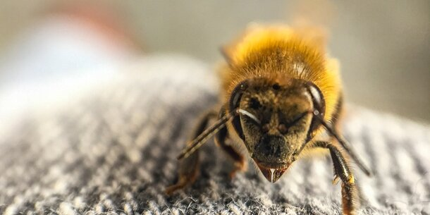so sch tzen sie sich bei einer insektengift allergie. Black Bedroom Furniture Sets. Home Design Ideas