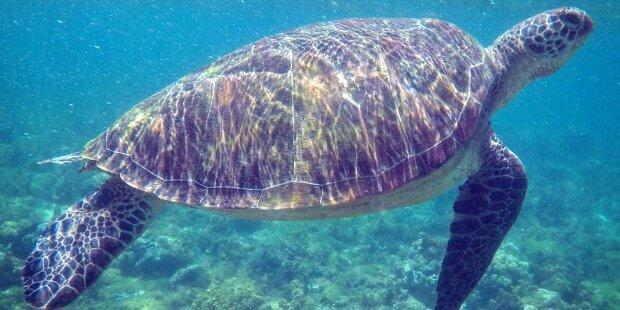 Ärzte entfernten 915 Münzen aus Schildkröten-Magen