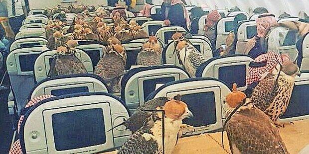 80 Falken auf Reisen im Linienjet