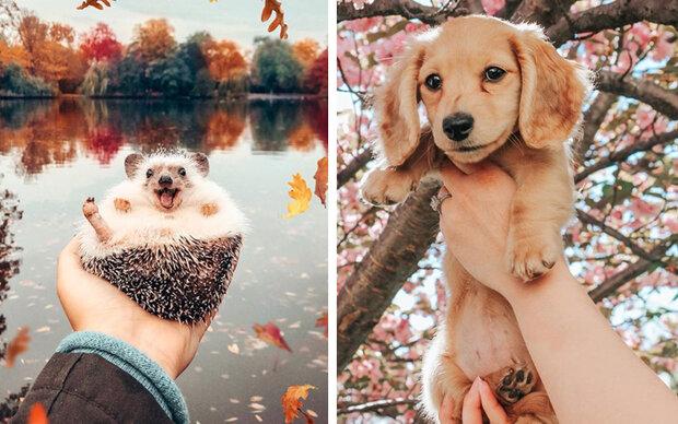 Die süßesten Tier-Accounts auf Instagram