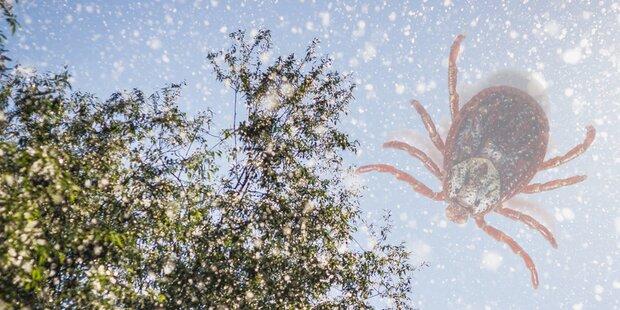 Zecken und Pollen statt Schnee