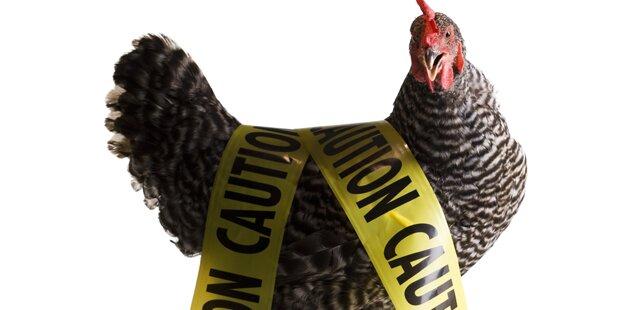 Vogelgrippe - Entstehung und Symptome