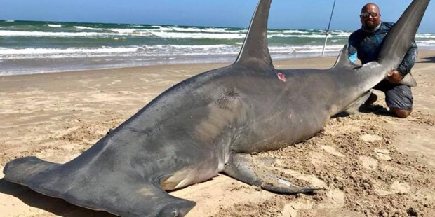Wahnsinn: Angler fängt 4-Meter-Hai