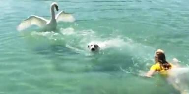 Larissa Marolt rettet Hund im See!