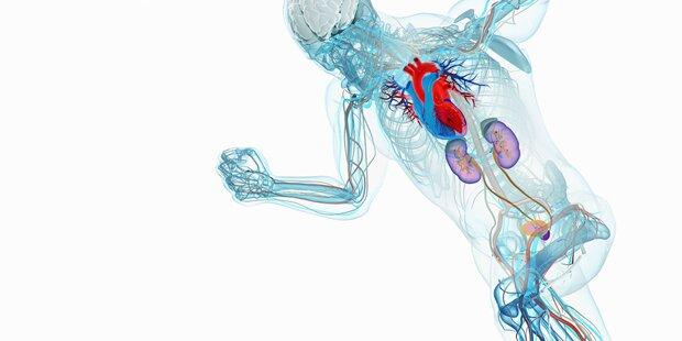 Bewegung halbiert das Herz-Risiko
