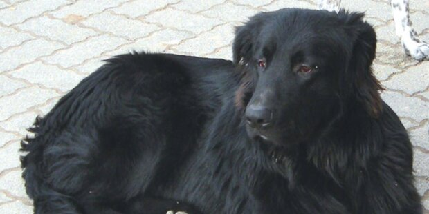 Nach Attacke: Wird Hund eingeschläfert?