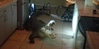 Riesiger Alligator drang nachts in Küche ein