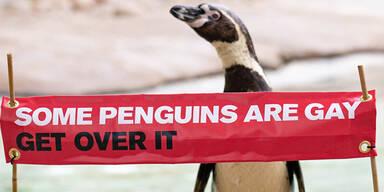 Schwule Pinguine: Zoo klärt über homosexuelle Tiere auf
