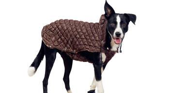 Die schönsten Hunde-Accessoires
