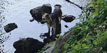 Rätsel um Hund in der Mur