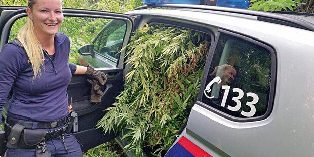 Polzeiwagen voller Marihuana sorgt für Lacher