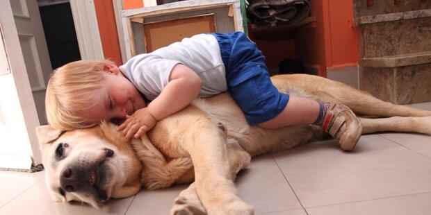 Familienhund als Risiko für Kleinkinder
