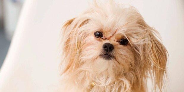 Aus Eifersucht: Schoßhund mit Auto überrollt