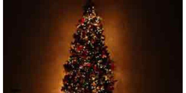 Christbaum für Vatikan kommt dieses Jahr aus NÖ