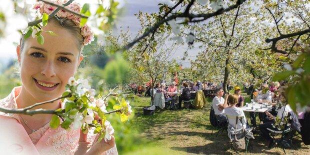 Ein Heiratsantrag beim Baumblütenfest?