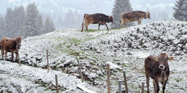 Schneefallgrenze sinkt auf unter 2000 Meter