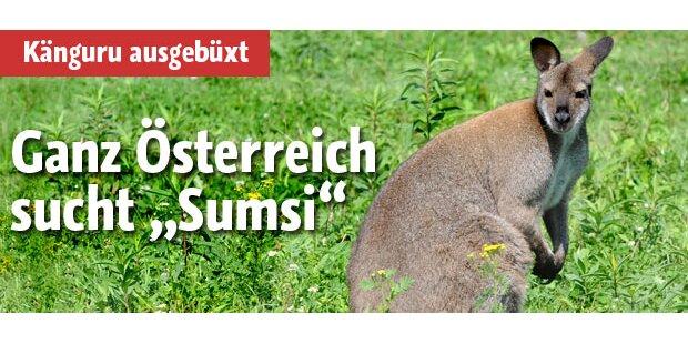 Ganz Österreich sucht