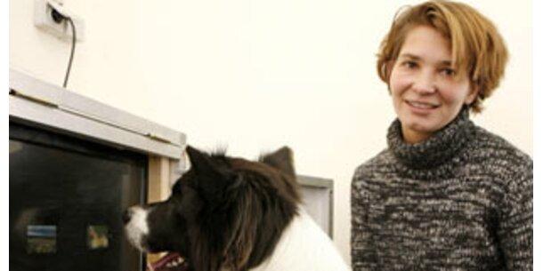 Wienerin erforscht Hunde-Intelligenz