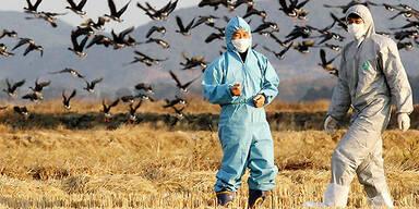 AFP_vogelgrippe_suedkorea
