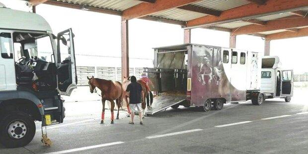 Pferdetransporter mit beschädigten Bremsen auf A1 gestoppt