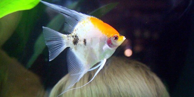 Coup beim Zoohändler:260 Fische weg