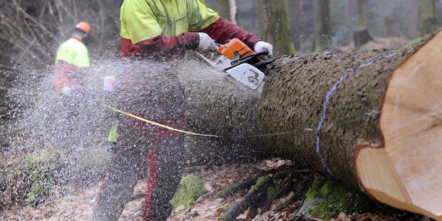 39-Jähriger stirbt bei Holzarbeiten in NÖ