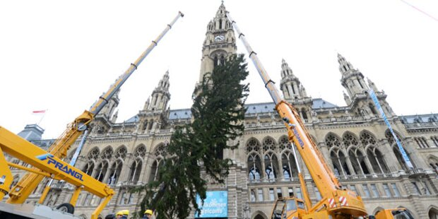 Unser Weihnachtsbaum ist schon da