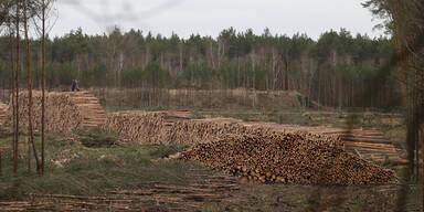 Tesla-Wald in Deutschland vollständig gerodet