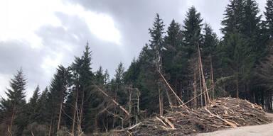 Enormer Waldschaden in Tirol