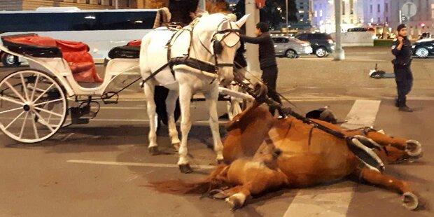 Fiaker-Pferd bricht mitten in Wien regungslos zusammen