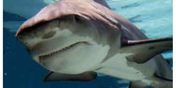 Haie und Rochen vom Aussterben bedroht