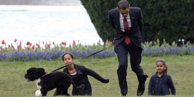 Obama nimmt ein Sackerl für Bo's Gackerl