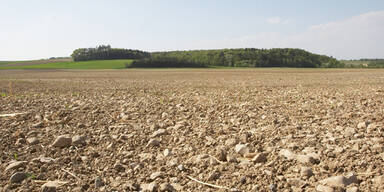Bauern drohen Ernteausfälle