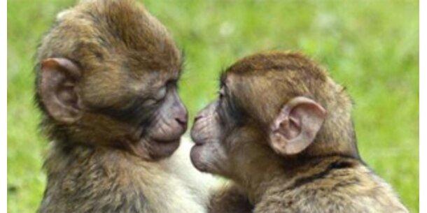 Affen müssen für Sex bezahlen
